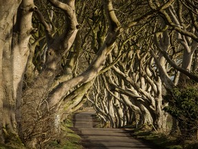 Dark Hedges (The Kingsroad)